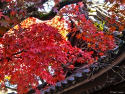 修禅寺の紅葉 01