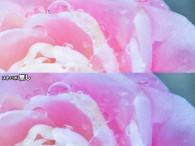 風景写真や野の花のマクロ撮影をするときに、クリップオンストロボを使ったことはありますか?  ● 光景写真にチャレンジしてみませんか? 先日、高尾梅郷にて梅を撮ってきました。僕以外にもプロアマを含 […]
