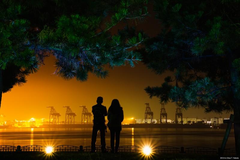 光景写真- 2014 湾岸サファリ