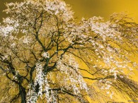 前回のエントリーで八王子近辺をうろうろとロケハンして廻っていると書きましたが、今回は本番のつもりで「 桜 」の「 光景写真 」を撮ってきました。かねてから「 桜の光景写真 」を撮れとクライアントから言われて […]
